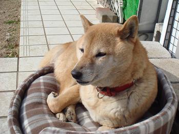 20080119sakura3