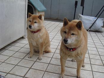 20080120yayosaku