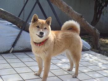 20080217sakura