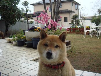 20080410sakura