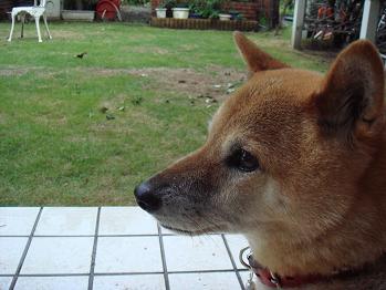 20080921sakura