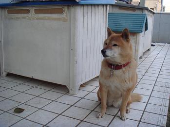 20081207sakura