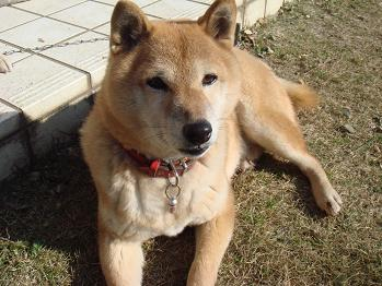 20081230sakura