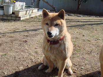 20090207sakura