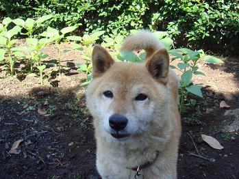 20090607sakura